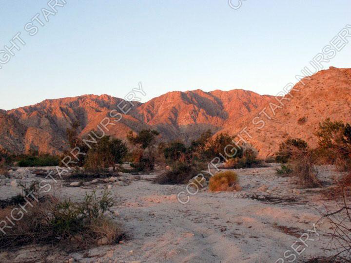 Sunrise on the Sierra Cucapa