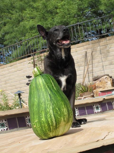 nikki the gardener 02